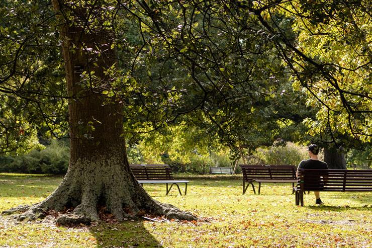 Botanic Gardens Melbourne Peaceful