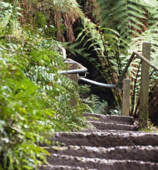 1000 Steps Pathway Header
