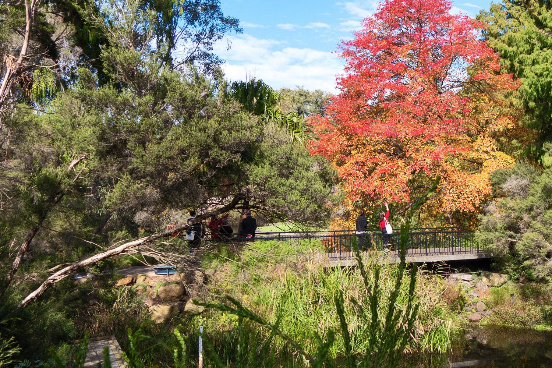 Botanic Gardens Melbourne Header
