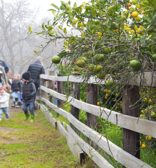 Collingwood Farmers Market Childrens Farm