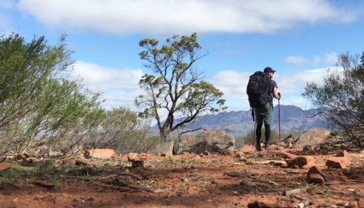 Day 4 – Wilpena Pound Resort to Red Range Campsite
