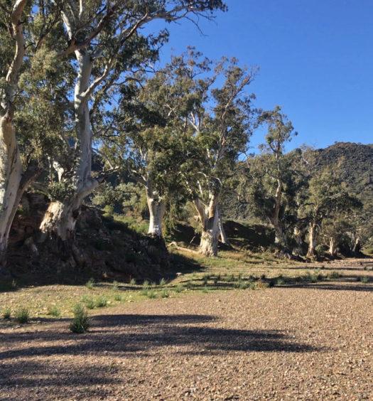 Day 5 - Red Range Campsite to Mayo Hut