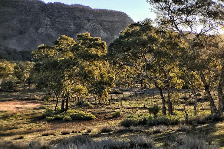 Day 1 Aroona Campground Heysen Trail