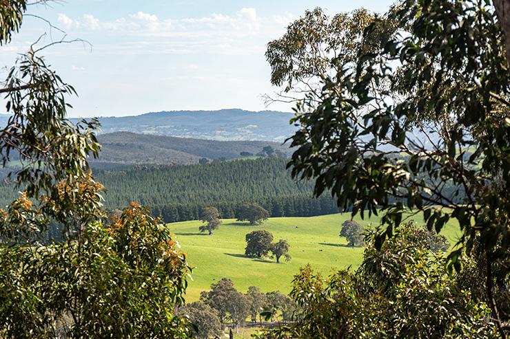 Mt Crawford Forest Wirra Wirra Peaks Heysen Trail