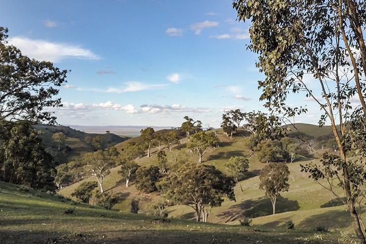 Mt Remarkable National Park Green Hills