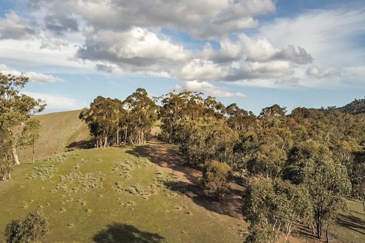 Mt Remarkable National Park Green Paddock