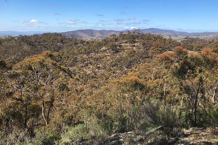 Mt Remarkable National Park Heysen Trail toward Gray's Hut