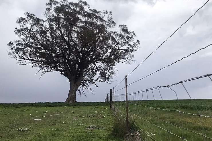 Field south of Melrose on the Heysen Trail