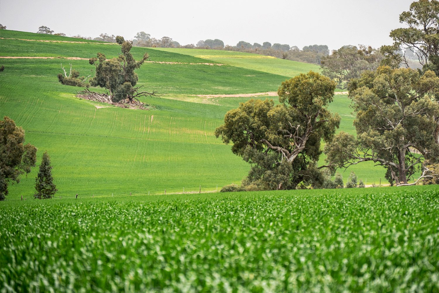 Melrose to Murray Town on the Heysen Trail