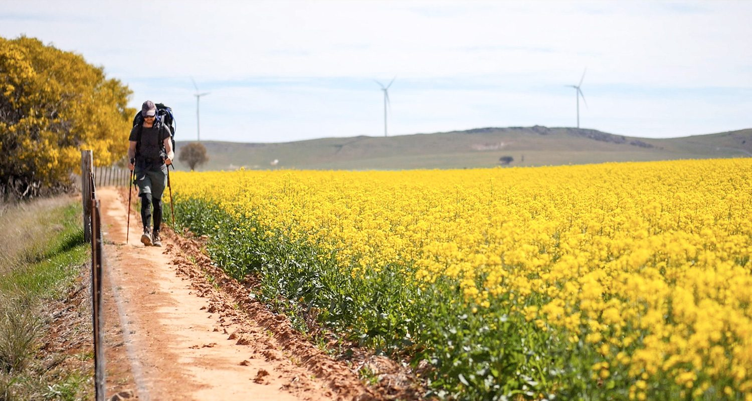 Tothill Belt Canola Trekking West Heysen Trail