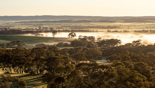 Day 40 – Marshalls Hut to Kapunda