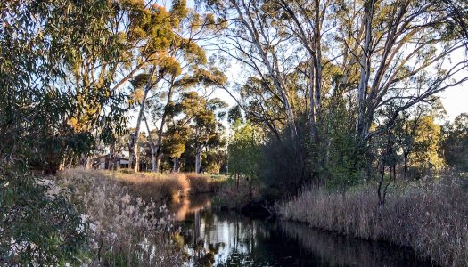 Day 43 – Tanunda (Rest Day)