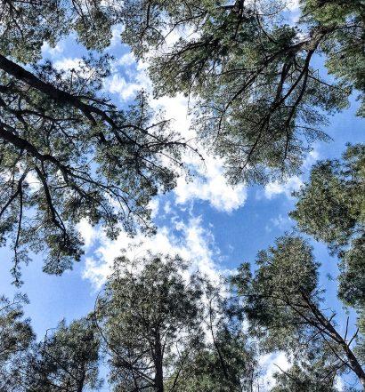 Day 51 - Rocky Creek Hut Chookaraloo Campground on the Heysen Trail