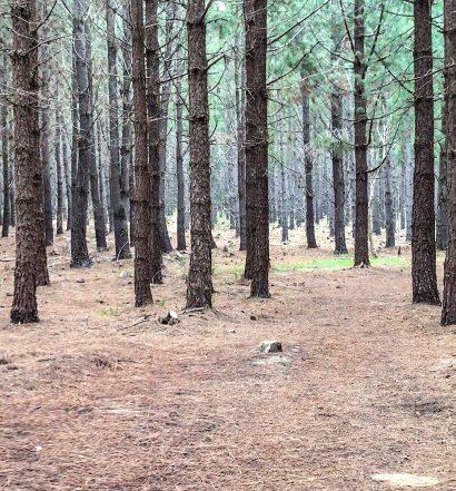 Day 52 - Chookaraloo Campground Nangkita on the Heysen Trail