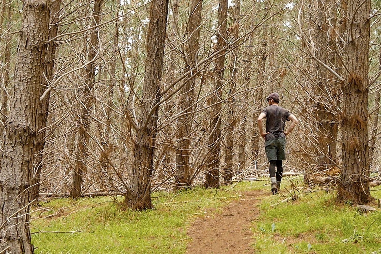 Day 55 - Inman Valley Newland Hill Campsite Heysen Trail