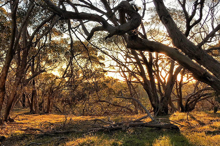 Heysen Trail Sunset Greenock Trees