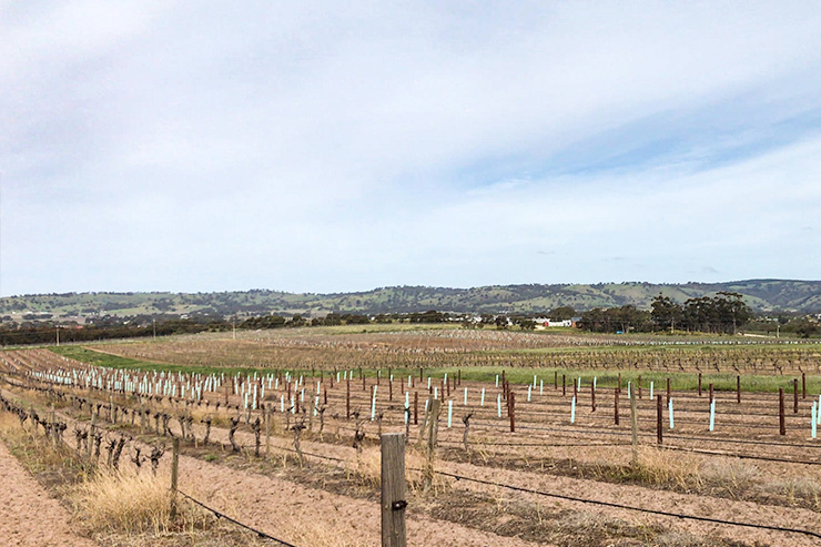 Barossa Valley Vineyards Heysen Trail