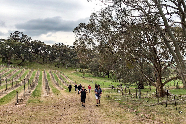 Barossa Valley Walkers Heysen Trail
