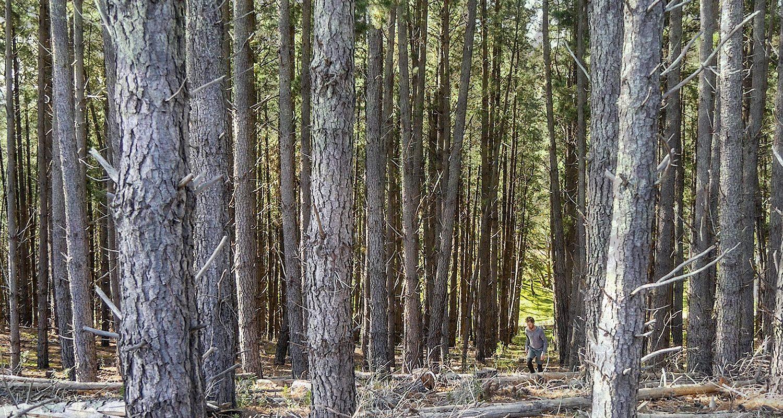 Mt Crawford Forest Trekking West Heysen Trail