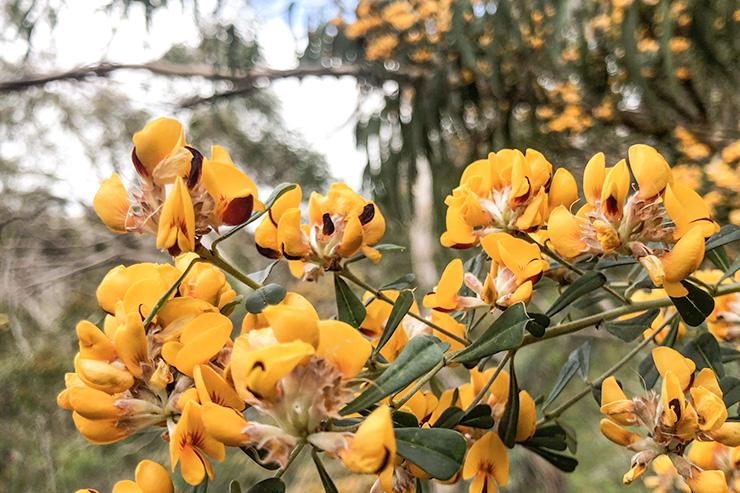 Warren Conservation Park Flowers Heysen Trail