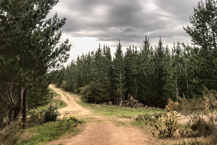 Heysen Trail Kuitpo Forest