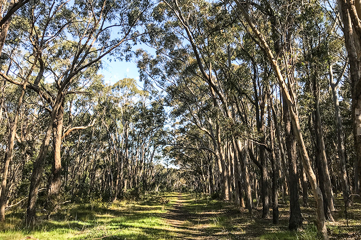 Heysen Trail Kuitpo Forest path