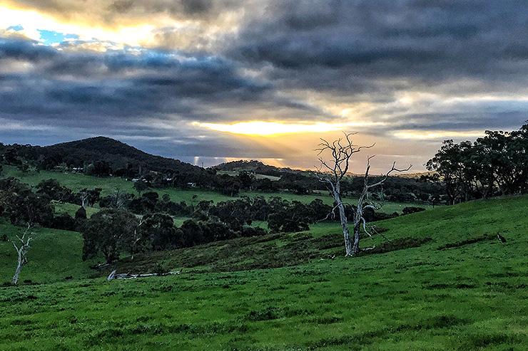 Field Sunset Heysen Trail