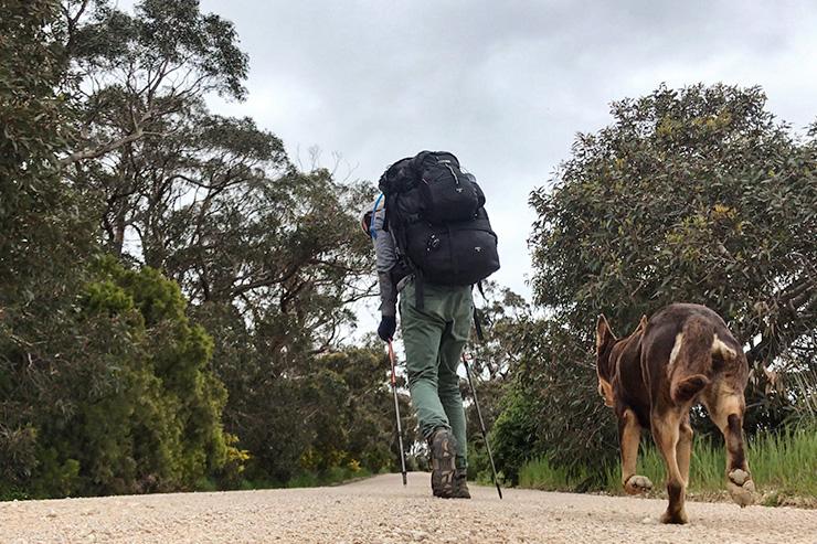 Trekking West Dog Heysen Trail