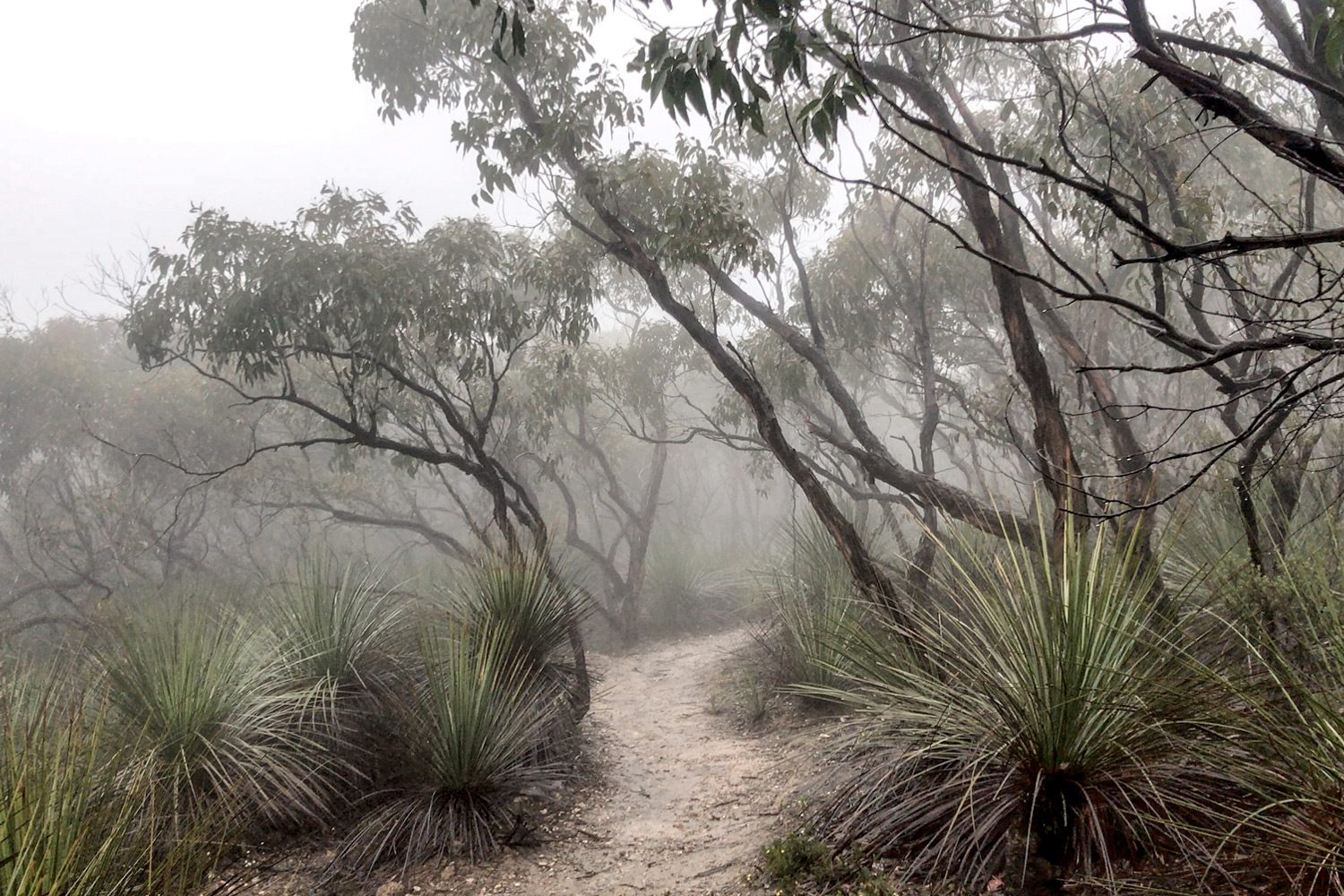 Fog Heysen Trail Deep Creek Conservation Park