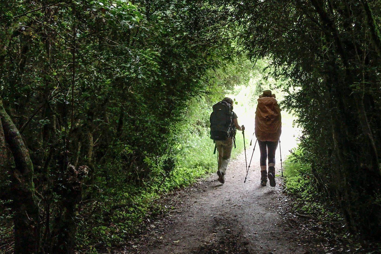 Camino Frances Roncesvalles to Larrasoaña