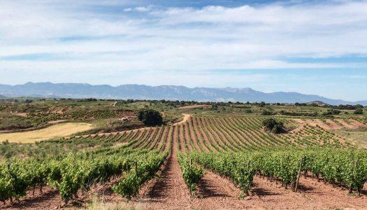 Day 8 – Logroño to Nájera