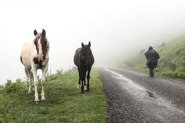 St-jean-pied-de-port Camino Horses