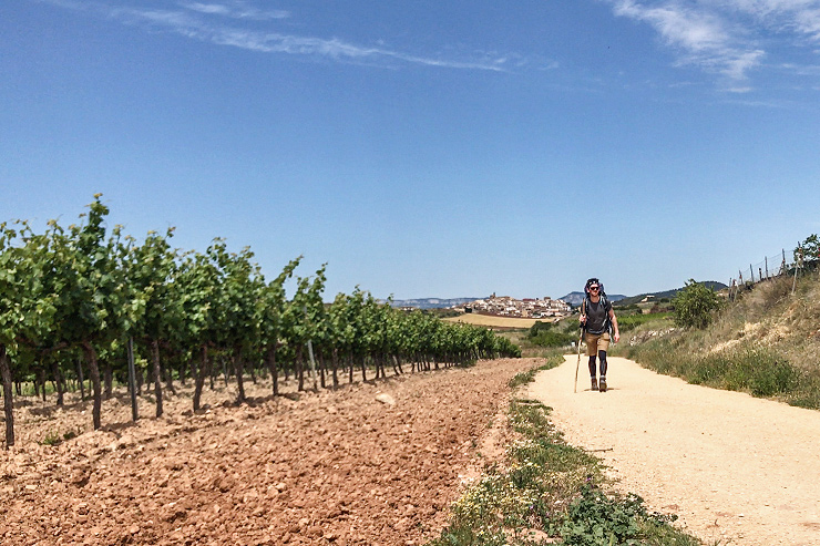 Camino Cirauqui Vineyards