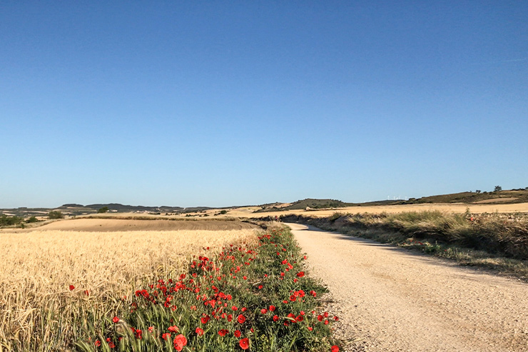 Camino Morning Walk