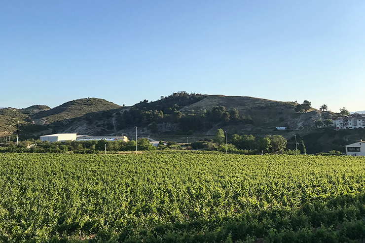 Camino Vineyards Bodegas Irache